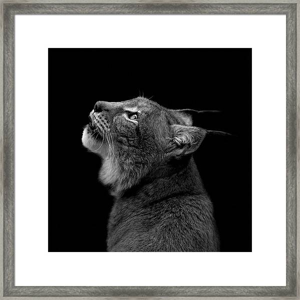 Portrait Of Lynx In Black And White Framed Print