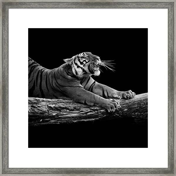 Portrait Of Tiger In Black And White Framed Print