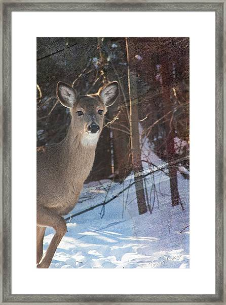 Posing For Me Framed Print