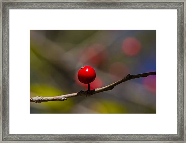 Possumhaw Fruit Abstraction Framed Print