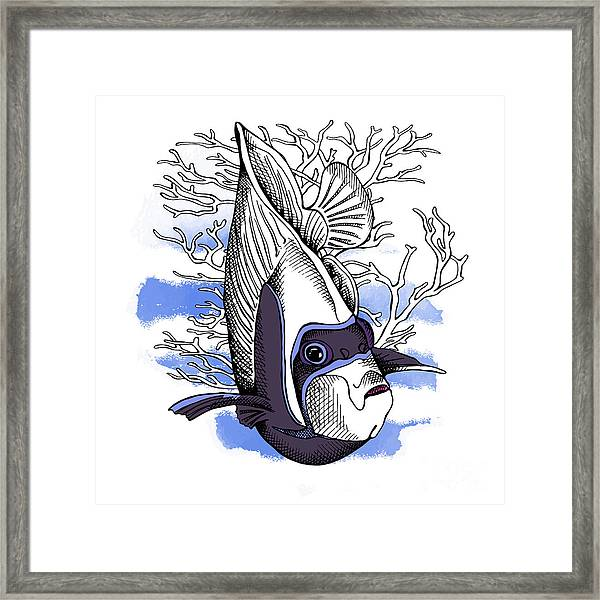 Poster With Image Of Fish Emperor Framed Print