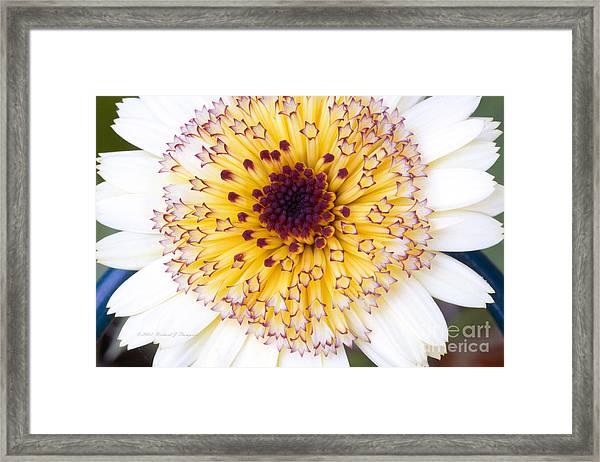 Pot Marigold Citrus Smoothies Framed Print