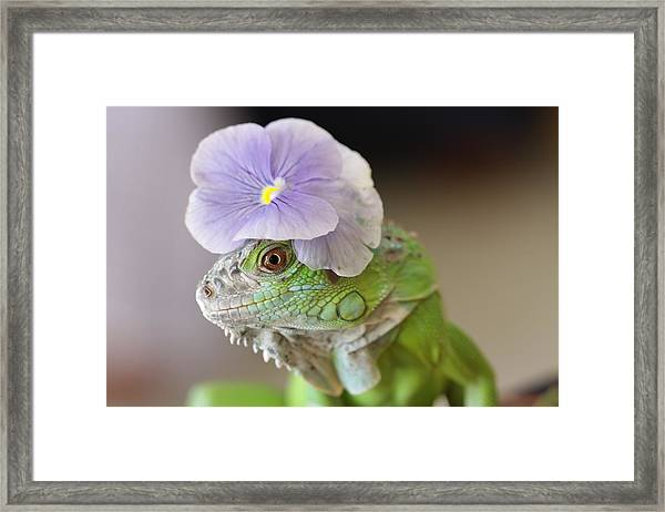 Potrait Of Chacoia Framed Print