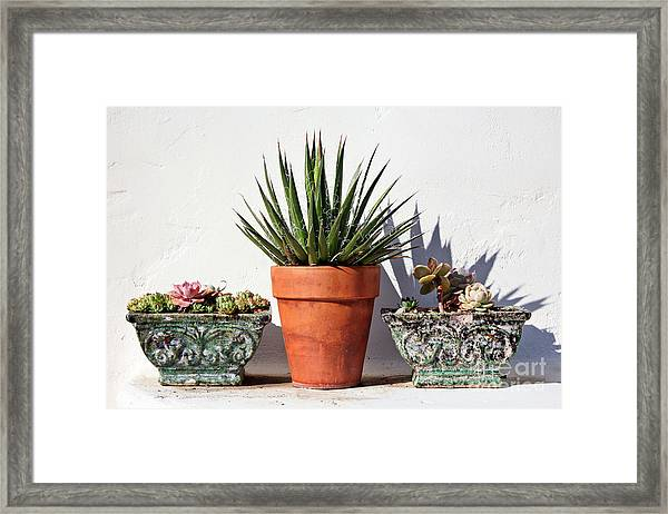 Potted Succulents Framed Print