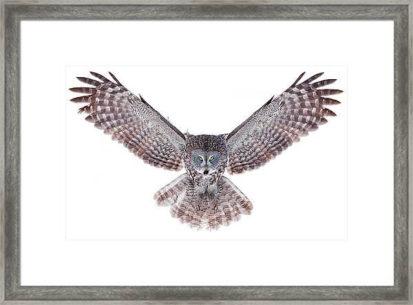 Power - Great Grey Owl Framed Print