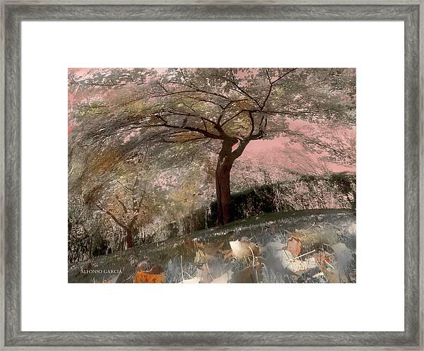 Pozuelo Autumn Framed Print