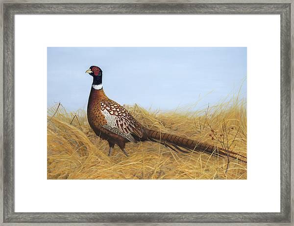 Prairie Splendor Framed Print