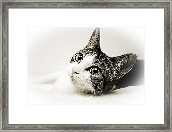 Precious Kitty Framed Print