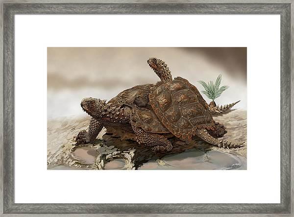 Prehistoric Turtles Framed Print by Jaime Chirinos/science Photo Library