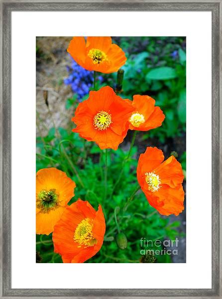 Pretty In Orange Framed Print