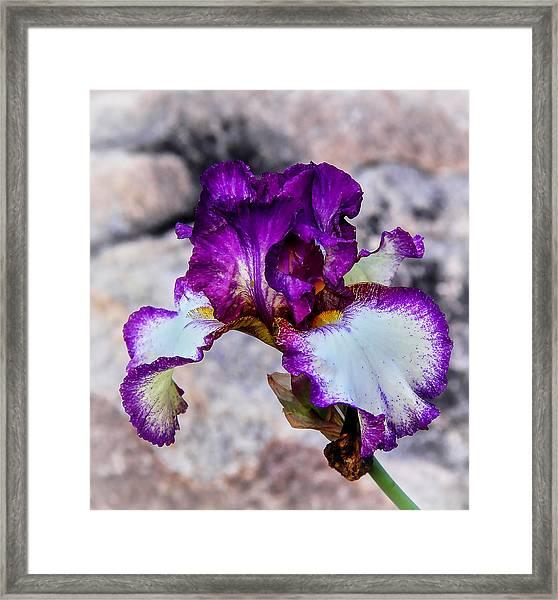 Pretty N Purple Framed Print