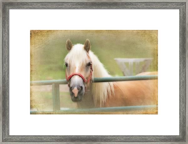 Pretty Palomino Horse Photography Framed Print