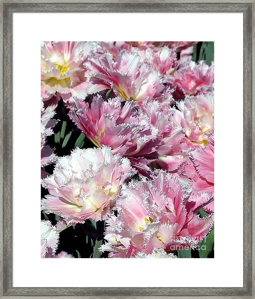 Pretty Pink Petal Framed Print