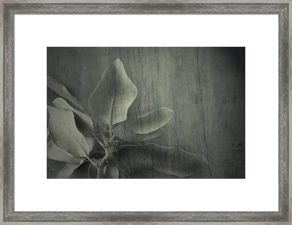 Preview Framed Print
