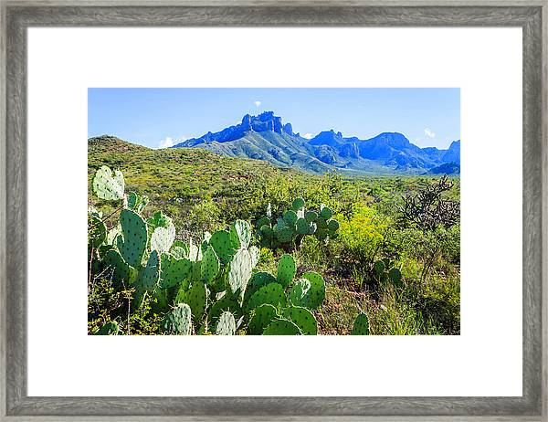 Prickly Pear Cacti, Casa Grande Peak Framed Print