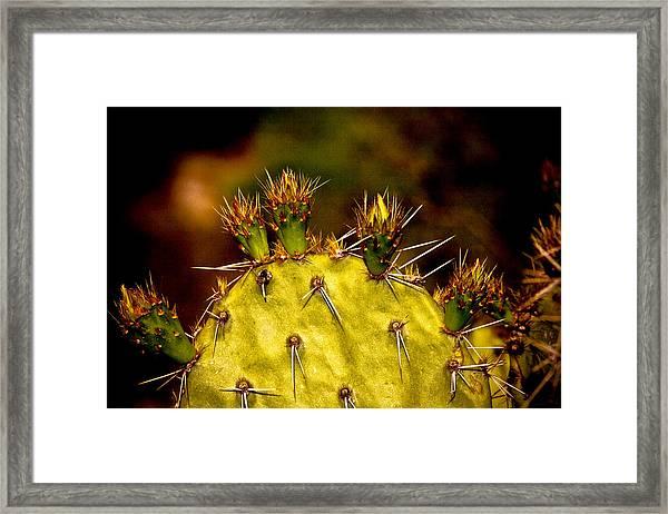 Prickly Pear Spring Framed Print