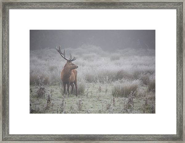Prideful. Deer . Framed Print by Aitor Badiola