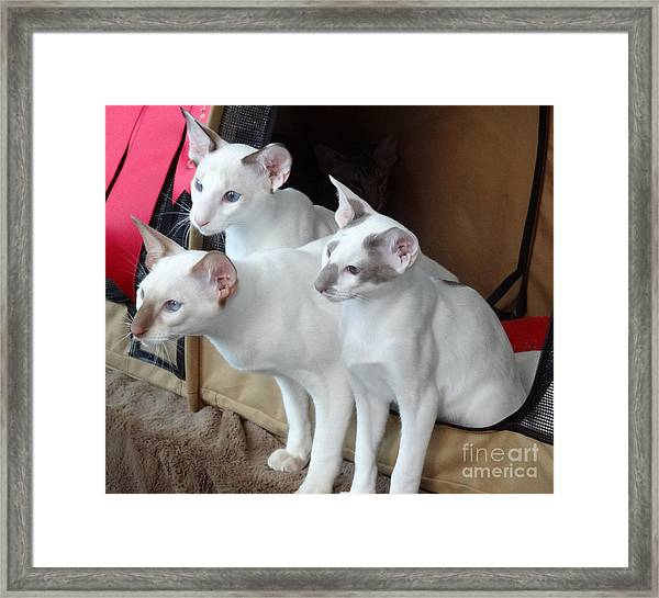 Prize Winning Triplets Framed Print