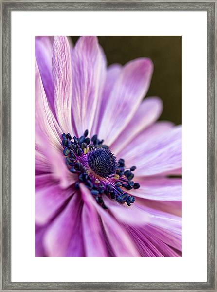 Profile In Pink Framed Print