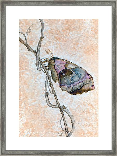 Promethea Moth Framed Print