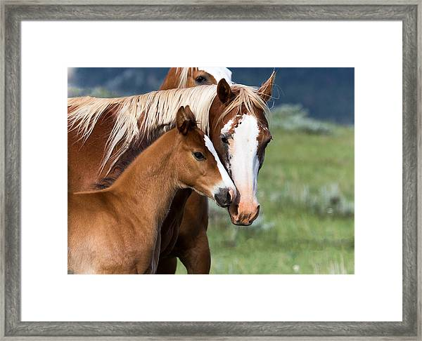 Proud Mommy Framed Print