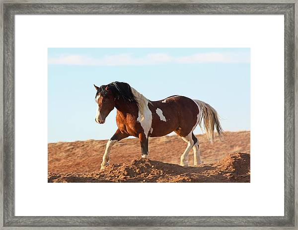 Proud Paint Mustang Framed Print