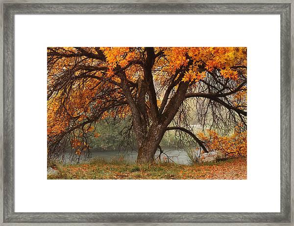 Provo Autumn #1 Framed Print