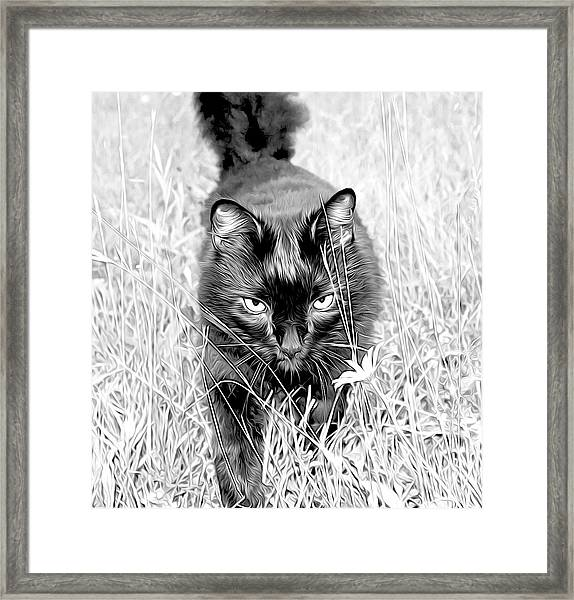 Framed Print featuring the photograph Prowl by Meghan OHare