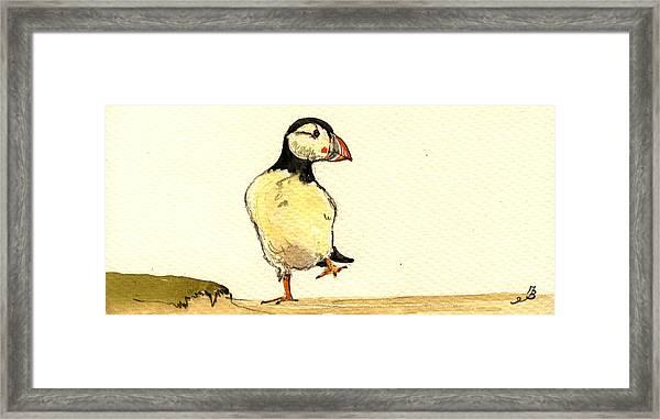 Puffin Bird Framed Print