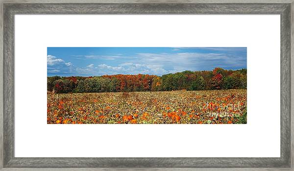 Pumpkin Patch - Panorama Framed Print