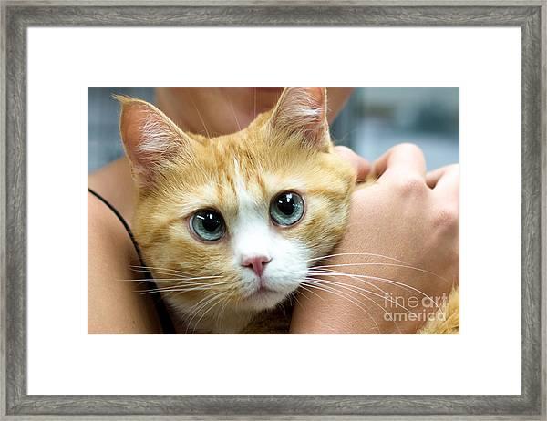 Punky Framed Print