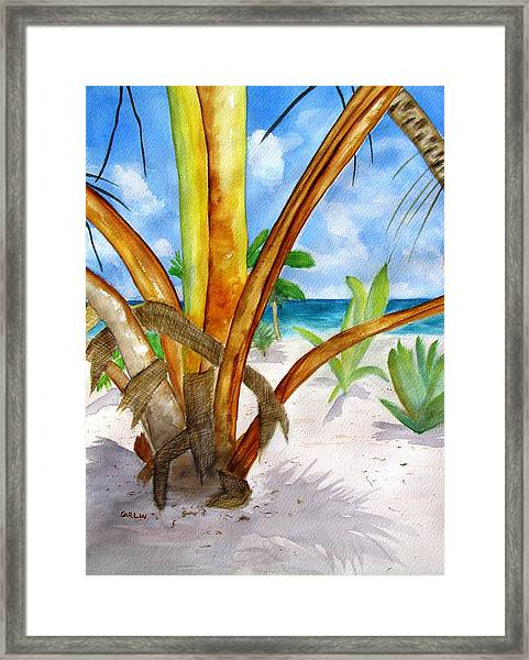 Punta Cana Beach Palm Framed Print