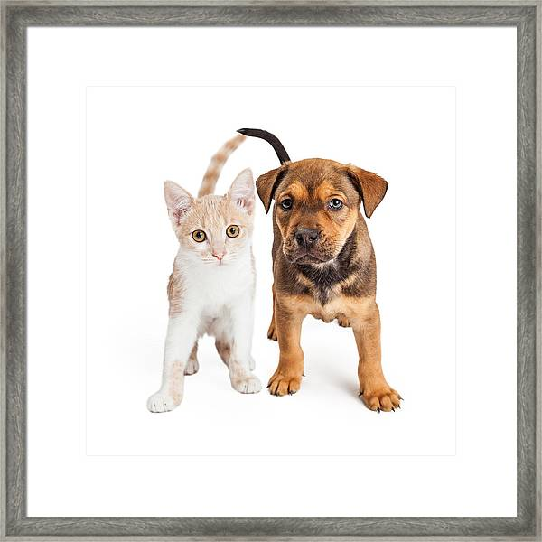 Puppy And Kitten Standing Together Framed Print