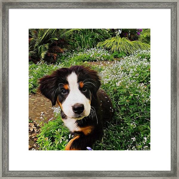 Puppy Art - Little Lily Framed Print