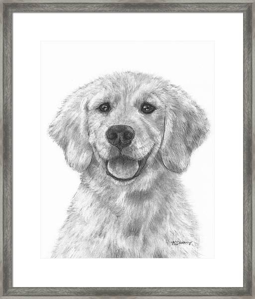 Puppy Golden Retriever Framed Print