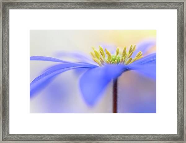 Pure ... Framed Print by Maxime Dugenet