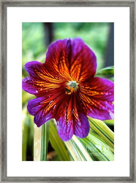 Purple And Orange Framed Print