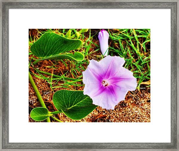 Purple Beach Flower Framed Print