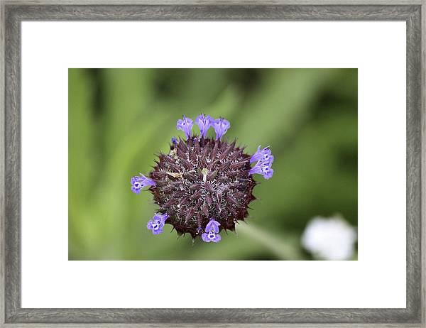 Purple Beauty Framed Print by Luna Curran