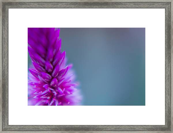Purple Blur Framed Print