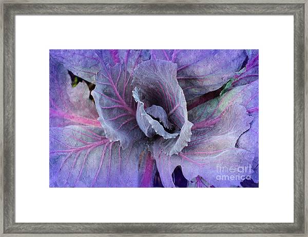 Purple Cabbage - Vegetable - Garden Framed Print