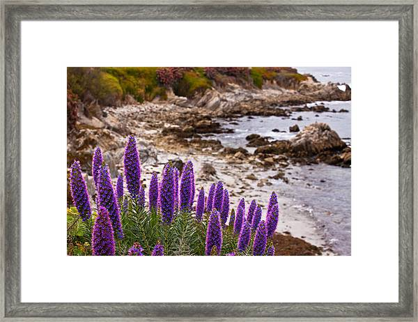 Purple California Coastline Framed Print