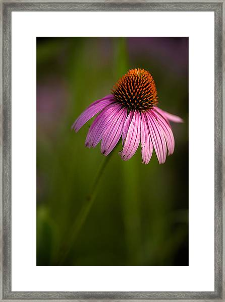 Purple Cone Flower Portrait Framed Print