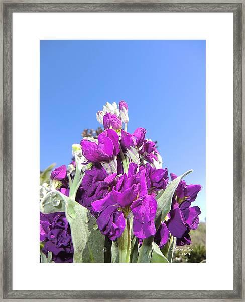 Purple Glow 2 Framed Print