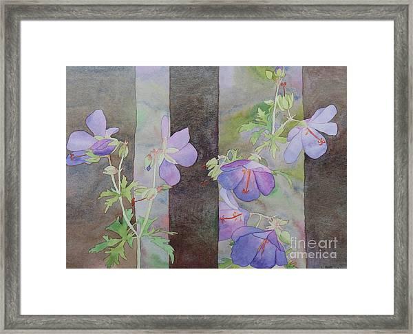Purple Ivy Geranium Framed Print