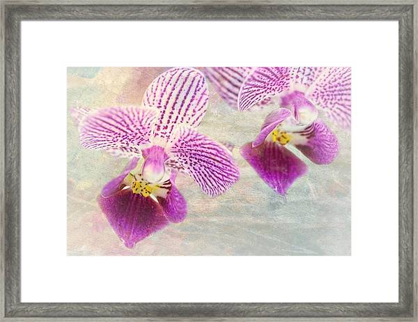 Purple Orchid 2 Framed Print