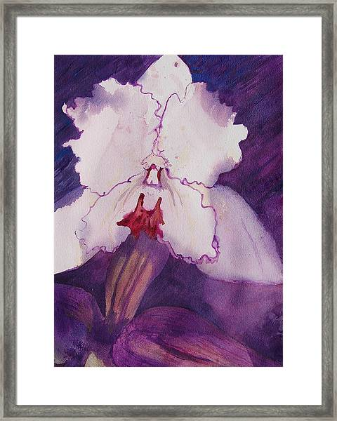 Purple Orchid Framed Print