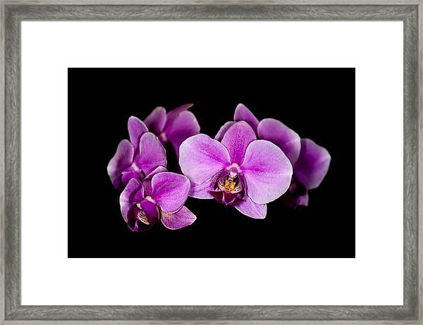 Purple Orchids Framed Print