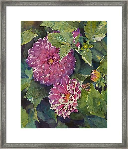 Purple Pinwheels Framed Print