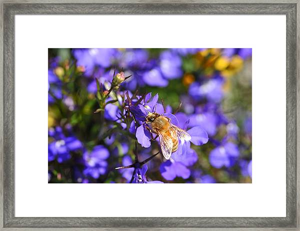Purple Pollination  Framed Print
